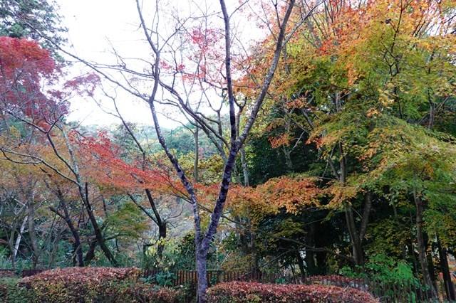 20181118 瑞宝寺公園 紅葉 (15)