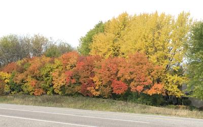 autumn1801.jpg