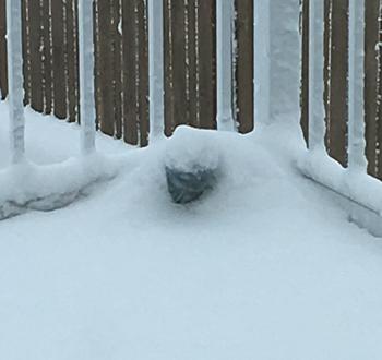 snow12021803.jpg