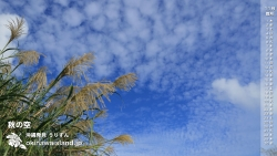 秋の空に映えるススキ