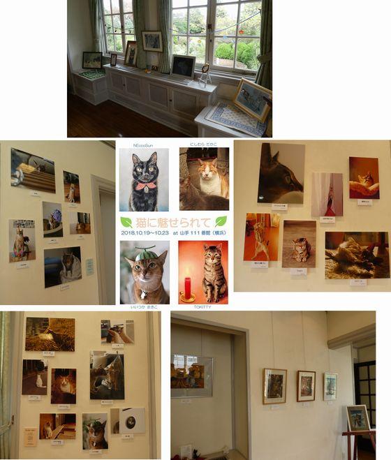猫写真展④