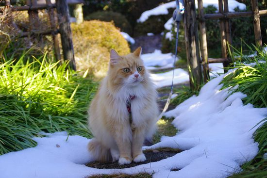 あーたん冬景色