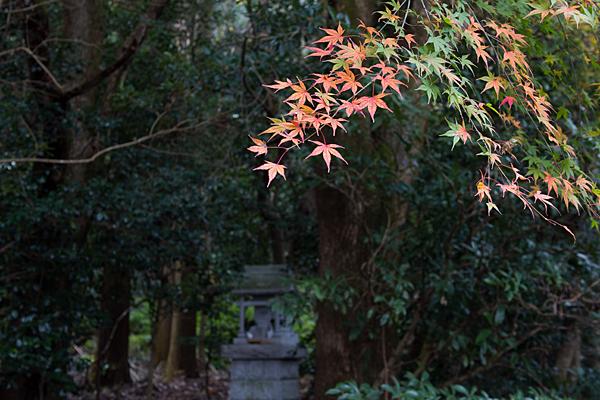 椿大神社モミジと龍神社