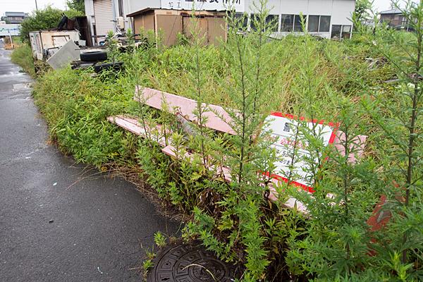 ベンチと草