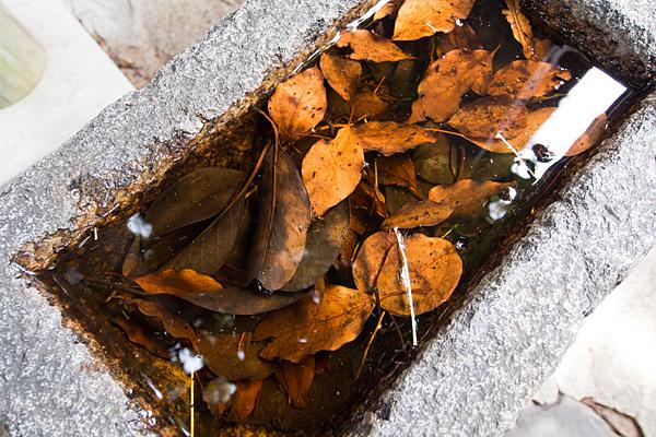 手水と枯れ葉