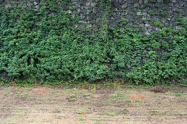 空堀の彼岸花