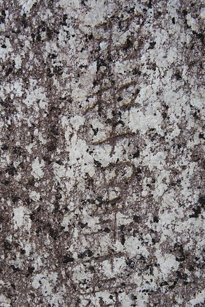 樫ノ木龍神(西畑町)昭和十四年