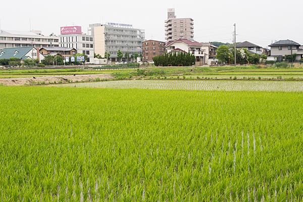 田んぼと街の風景