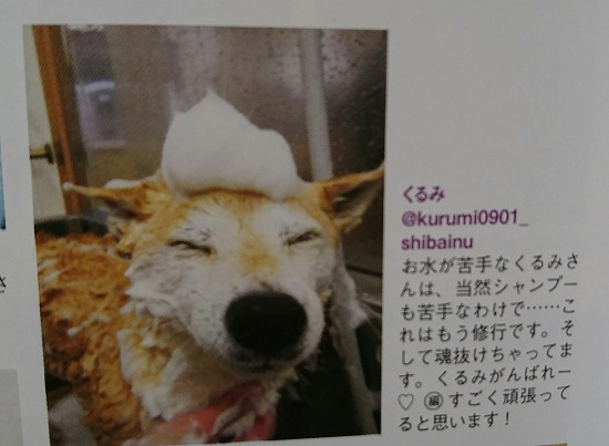 shibamaru3.jpg