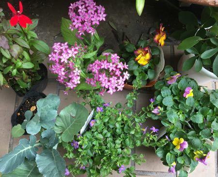 秋植えの花
