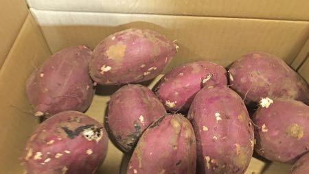 茨城のサツマイモ
