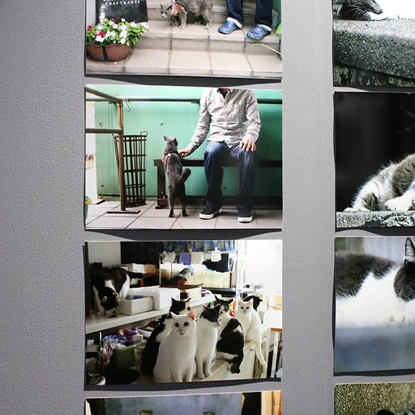 Photo Bar sa-yo: フォトバー サヨウ 横浜 関内 吉田町 猫 ねこ 写真