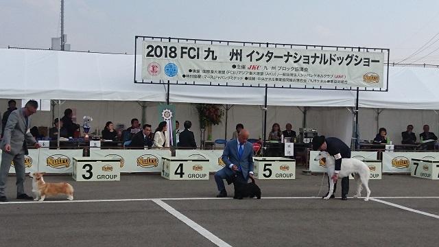 佐賀ドッグショー1