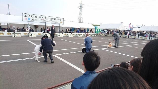 佐賀ドッグショー3