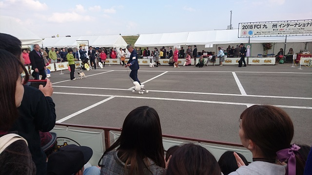 佐賀ドッグショー6