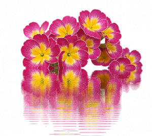 spring-2113635__340.png