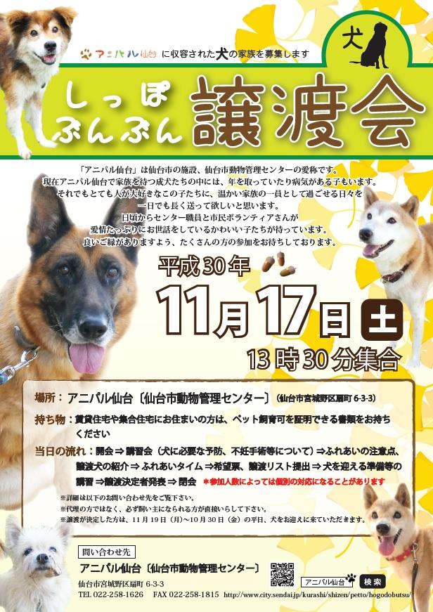 譲渡会犬1