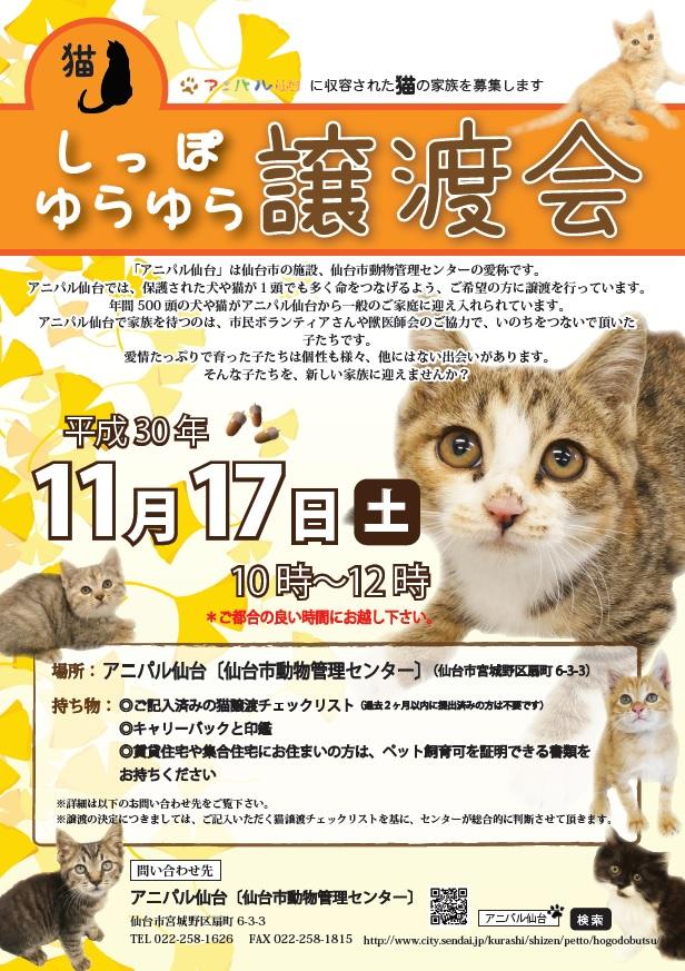 譲渡会猫1