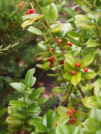my-garden 043