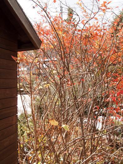 my-garden 018 (3)