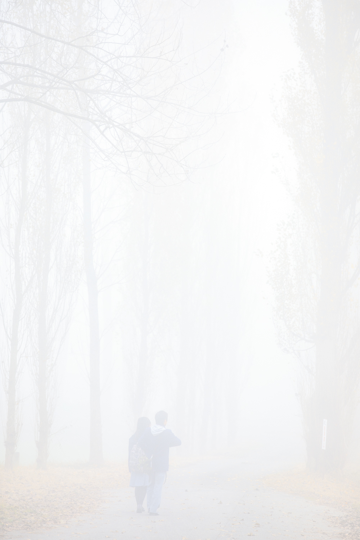 深い霧の朝にc
