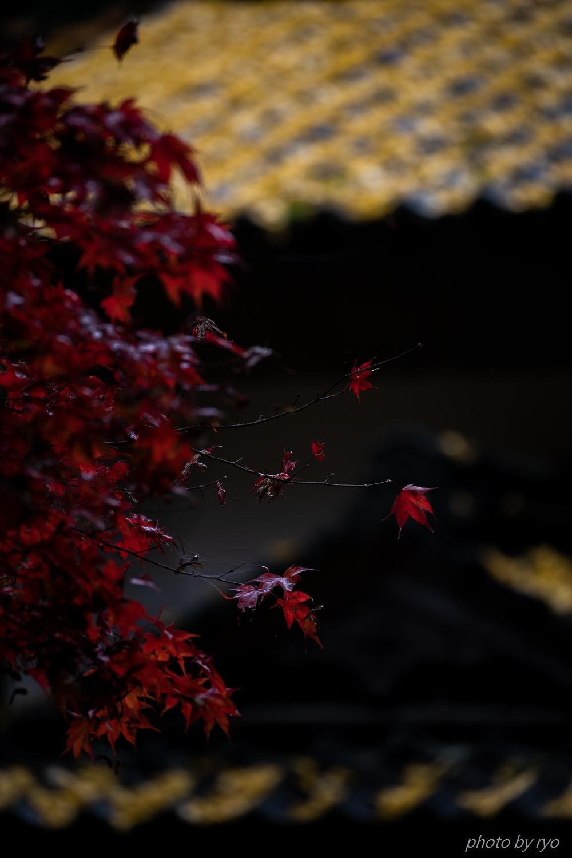 龍華寺の紅葉 Ⅱ_1