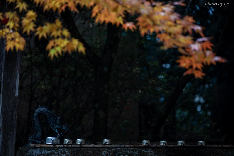 龍華寺の紅葉 Ⅱ_2