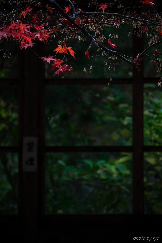 龍華寺の紅葉 Ⅱ_3