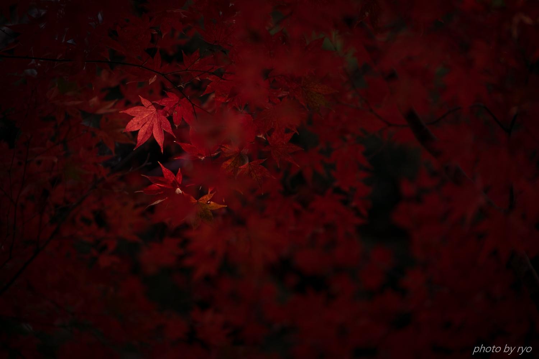 尾関山公園の紅葉_4