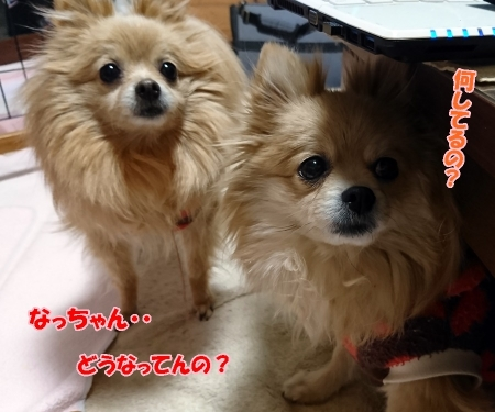 DSC_2557.jpg