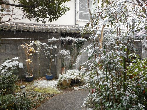 雪の庭17_02_10