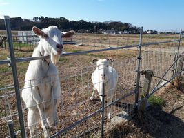 【写真】アランフィールドの柵に前脚をかけて顔を伸ばすポールとその隣でこちらを見るアラン