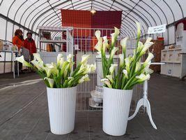 """【写真】受付ハウスの中央に飾られた君津特産の白い花""""カラー"""""""