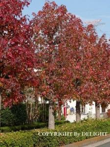 近所の木々