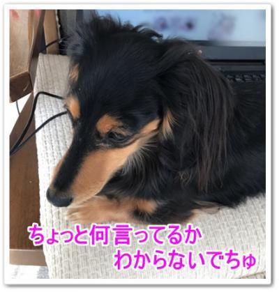 IMG_8150_convert_20190126190115.jpg