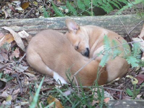 2012年11月、美和ちゃんが松山総合公園の草むらで見つけた保護直前の㊧コロリンと㊨マリリン