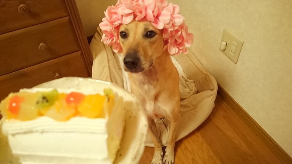 『お誕生日のケーキに釘付けのマリリンぴかぴかハートマーク️ぴかぴか』