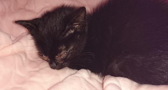 美和ちゃん12 保護初日はほとんど動かず寝床で休んでいた黒子猫ちゃん