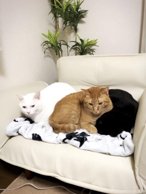 冬恒例の猫団子です💖