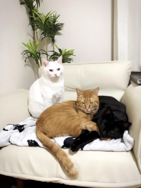 弟猫たち集合です✨💕