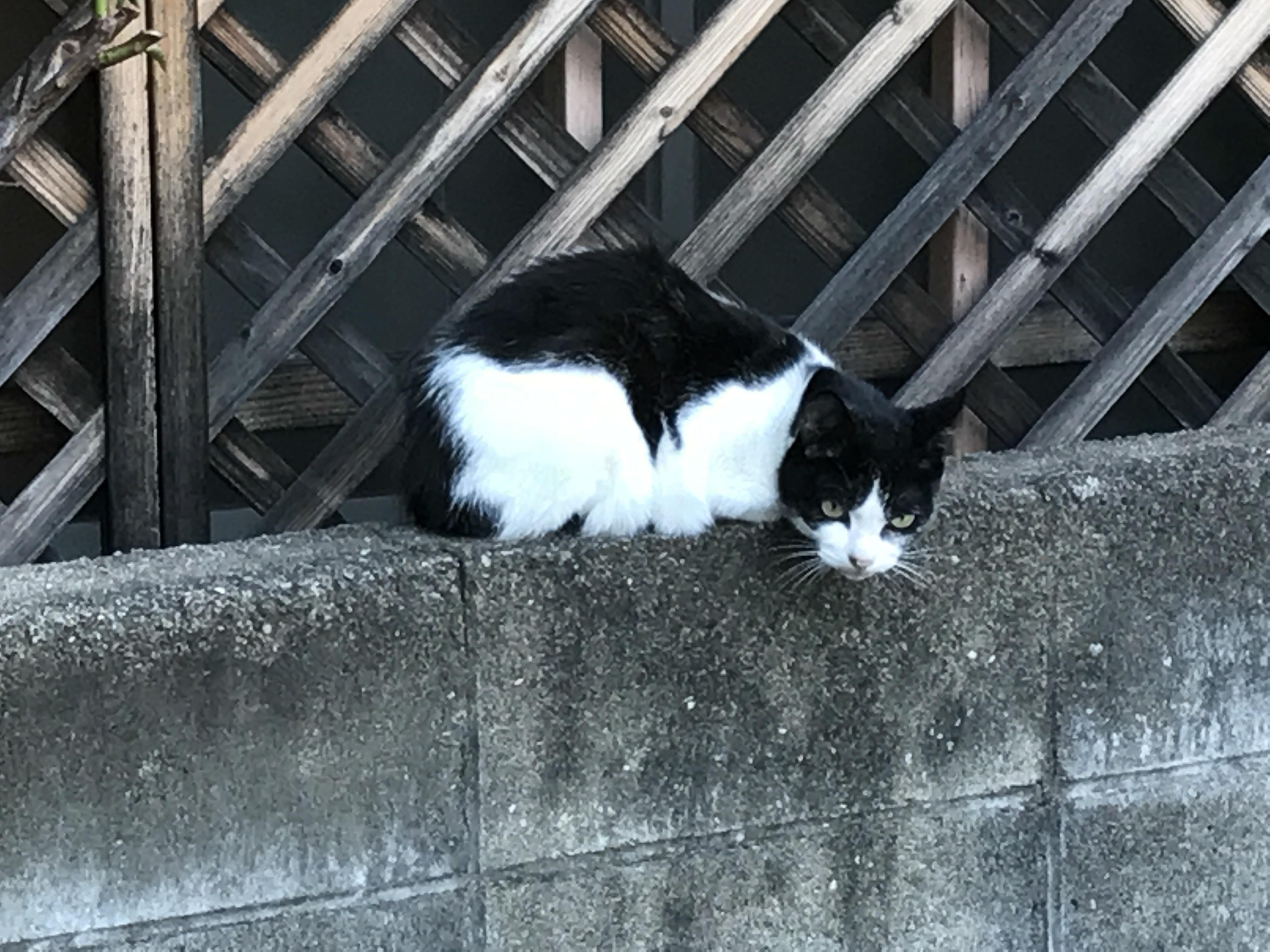 福岡の野良猫ちゃん✨
