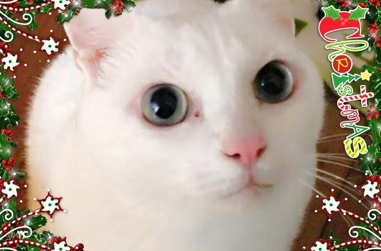 猫ちゃんママ20