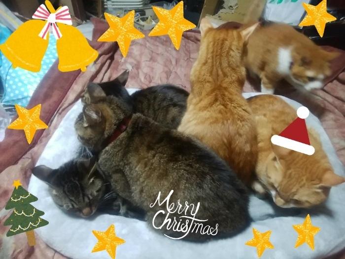 アグネス6クリスマスプレゼントのベッドでくつろぐアグネス家の猫達