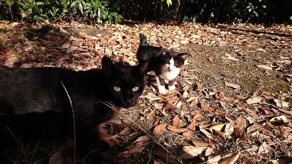 美和ちゃん6松山総合公園の母猫と治療が終了した子猫ちゃん