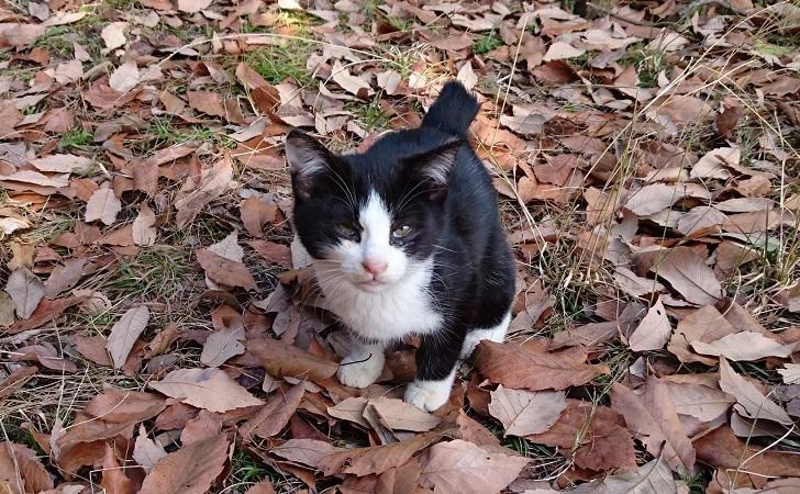 美和ちゃん7 12月27日、久しぶりに姿を見せた白黒子猫ちゃん✨❤️✨元気そうで良かった~