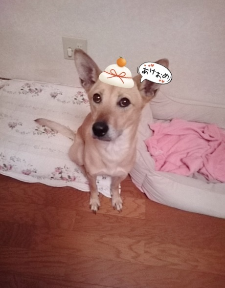 美和ちゃん新年明けましておめでとうございますだワン