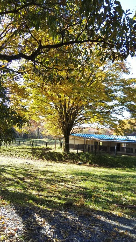 センター内の木