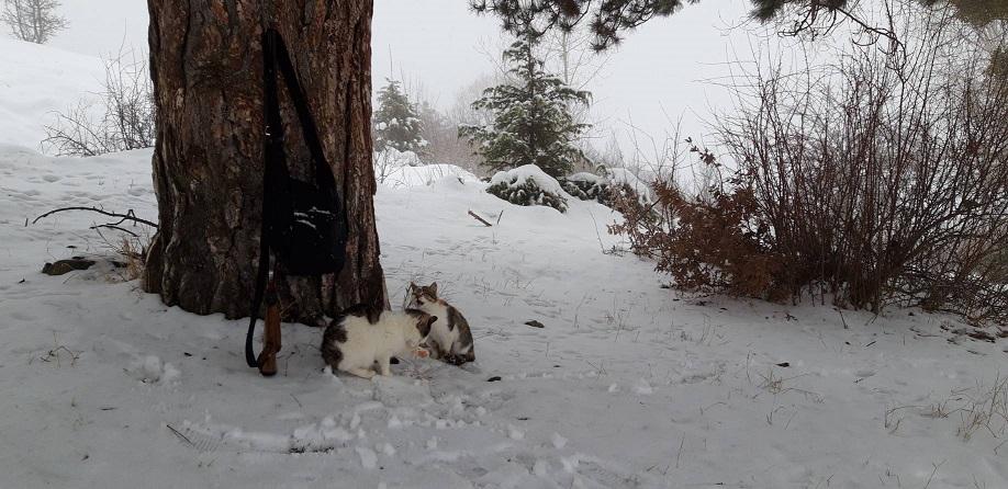 ミーママのダンサー友達がトルコの雪景色送ってくれました日本では寒がりやの猫ちゃん達、慣れたように雪の中走っています
