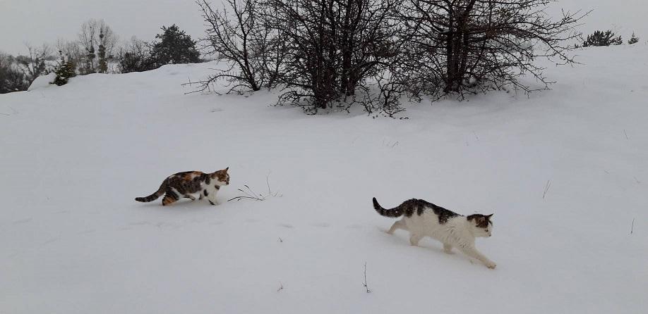 ミーママのダンサー友達がトルコの雪景色送ってくれました日本では寒がりやの猫ちゃん達、慣れたように雪の中走っています1