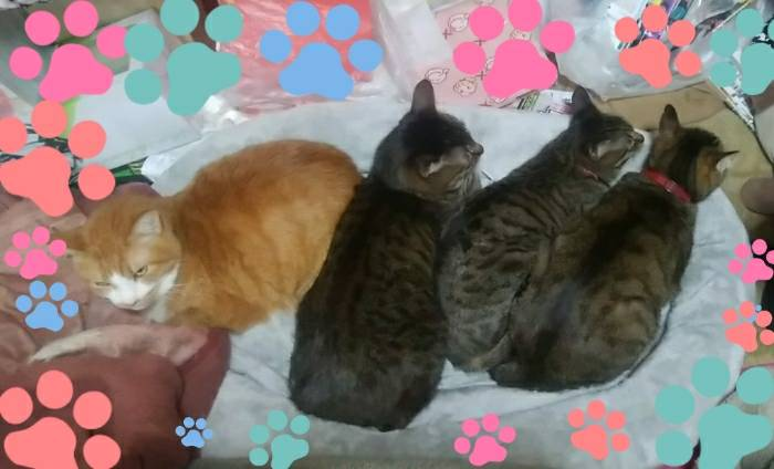 アグネス家 猫ベッドで寝る猫達